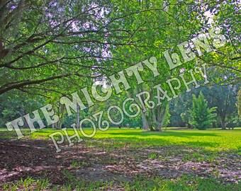 Garden Landscape {Photography}