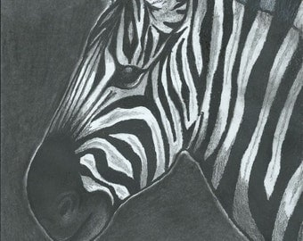Hand-drawn zebra picture