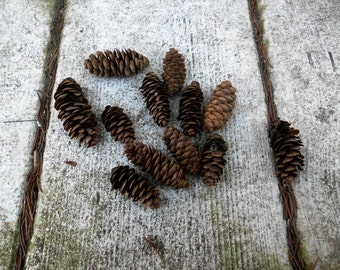 Pinecones 50 Mini Pine Cones Rustic Country Decoration Tiny Miniature Real Pinecones pine cone fall autumn trees nature small lot bulk
