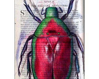 Red & Green Beetle