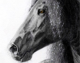 Horse Drawing - Friesian Majesty - Print of Original