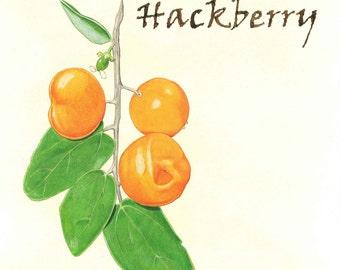 Spiny Hackberry Print, Kitchen Art