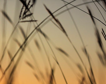 Sunset grass silhouette 4