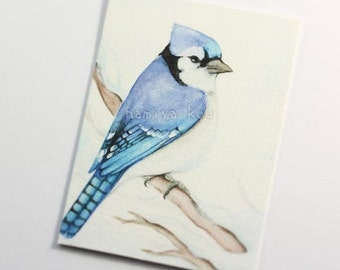 ACEO Print, Bird Artwork, Beautiful ATC Print, Blue Jay, North American Birds, Watercolor, Limited Edition Giclee Print, Wildlife Fine Art