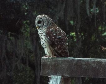 Owl on swing set .