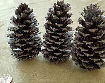 Silver-tipped Painted Pinecones
