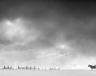 Winter Horses, winter, snow, barn, ranch, storm, sky, Black and White, fine art, photography