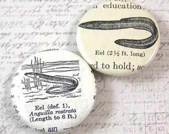 Eel Fish Pinback Button Set