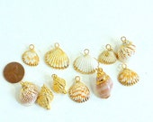 Natural Sea Shell Charms, Real Sea Shell  Pendants with Gold Bails, Gold Sea Shell Charms 11 Pieces
