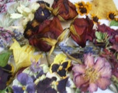LAST ONES! - 50 Dozen Variety Dried Pressed Flowers - Needs No Watering! Cards, Scrapbooking, Jewelry, Weddings, Ect.