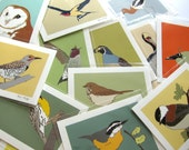Wild Bird Print--choose your bird--choose your size!
