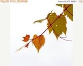 40% OFF SALE Fall Photo Nature Photograph Grape Vine Minimalist Wall Art Olive Green Rust Rustic Decor 5x5 Inch Fine Art Photography Print A