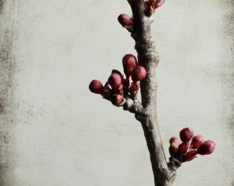 Botanical photography gray burgundy art wine red modern plant wall art tree branch 'Plum Branch One'