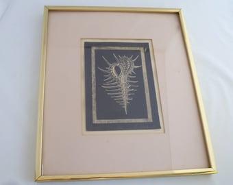 framed murex lithograph of shell shell lithograph walter dankoski shell wall hanging golden frame 11 x 13 frame 5x7 lithograph