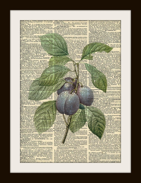 Art Print PLUMS 8x10 Dictionary Gold Gilded Vintage Page