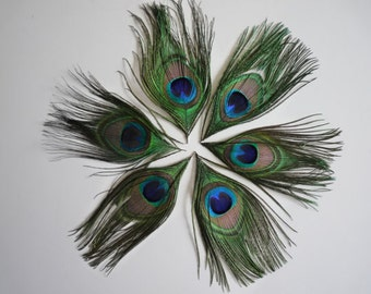 NATURAL PEACOCK EYE Feathers 6 pieces , Large Eyes  /  932
