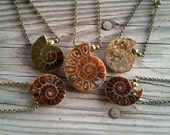 ammonite fossil necklace / ammonite jewelry / ocean jewelry / ammonite necklace / ammonite pendant / HEY08Q