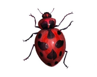 """Spotted Lady Beetle - Insect art print, 8.5"""" x 11""""."""