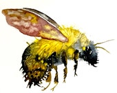 Bumblebee Watercolor Painting, Original Art, Tiny Paintings