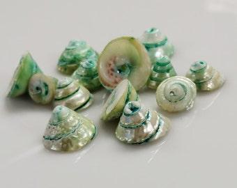Aqua Green Dyed Spiral Shell Beads - GM391