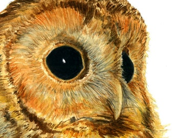 Tawny Owl portrait - Watercolour Art Print (8 x 8 inches)