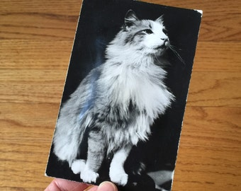 Vintage 1950s Postcard / 50s Squeaky Cat Postcard Used / Working Condition