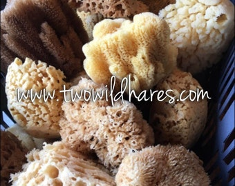 SEA SPONGE, Sustainably Harvested, Natural Sponge