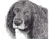 RESERVED Custom Dog Pet Portrait Pencil 8x10