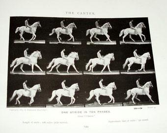 Eadweard MUYBRIDGE,ANIMALS in MOTION,antique book 1925,London,horses,elephants,camels,donkeys,epic study,buffalo,cats,leap,gallop,trot,birds