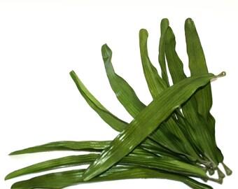 10 Jumbo Blades of Grass