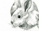 Rabbit Original Graphite Sketch - 4 x 6 Art for Sale
