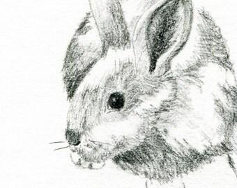 Rabbit Original Graphite Sketch - 4 x 6 Art for Sale