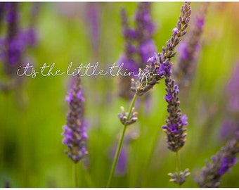 Typographical print - It's the Little Things - purple flowers in dreamy light, fine art print for home, office, or dorm