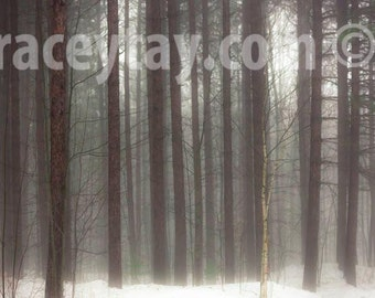 Rustic Wall Decor, Canvas Wall Art, Winter, Pine Forest Photography on Canvas, Large Canvas Art