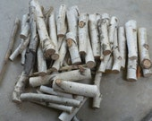 Set of 50 White Birch Branches Perfect for Weddings, Centerpieces, Fireplace, Home Decor
