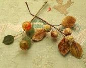 Vintage celluloid berry cluster lot velvetunique millinery berries 1930  hat  fruit shapes sheer leaves