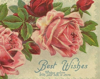 Embossed Pink and Red Rose Blossoms on Vintage Postcard 1910
