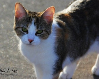 cat photo card, photo note card, blank card, Kitty photo card, cat photography, cat card, cat Stationary, greeting card, Fall, autumn