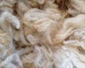 Romney Raw Fleece White Wool Fleece Spinning Fiber Doll Hair