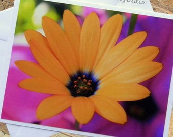 African Daisy Flower Photo Note Card. Montana Nature Photography. Golden Yellow Flower. Summer Flowers.