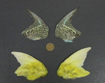2 Pairs of Fanned Wings Dried Birds Wings Feathers Art Craft Taxidermy Yellow Greens