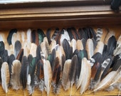 Wing Feathers - Lot of 100 - BULK SALE - Quills In Tact - Black Blue Gray Gold and Mottled Natural Colors