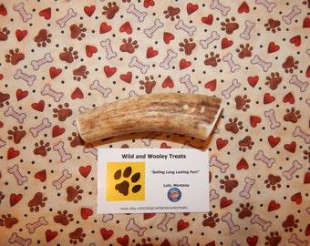 "Organic Medium Elk Antler Dog Chew ""Made in Montana"" (Lot C13)"