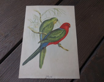 Vintage 1940s  J. Gould Small Print Two Parrots Red/Blue/Green Sitting on Branches 5x7 Birds