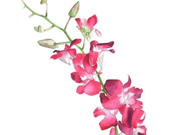 Singapore Orchid watercolour painting print, SO10716, A4 size print, Orchid painting. orchid print. Botanical wall art, Zen wall art