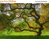 SALE 20% OFF Japanese Maple Tree in Spring, Landscape Photograph, Green, Nature, Tree of Life, Art Print, Zen, Woodland, Old Tree, 6X9