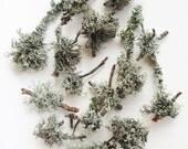 Twigs with lichen white 15pcs Woodland wedding table decoration Nature supplies Grey lichen terrarium decor Mossy branches Forest supplies
