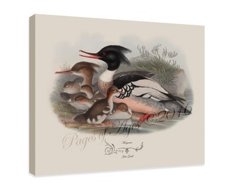 """Canvas Print - Merganser by John Gould (1804-1881) - 16"""" x 20"""" - On Stretched Canvas"""