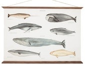 Whales Poster A3 Art Canvas - handmade vintage inspired educational chart drawing illustration - watercolor sea animal print home decor