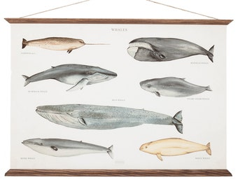 Whales Poster A3 Canvas - handmade vintage inspired educational chart illustration - wall decor print - WHAP3006
